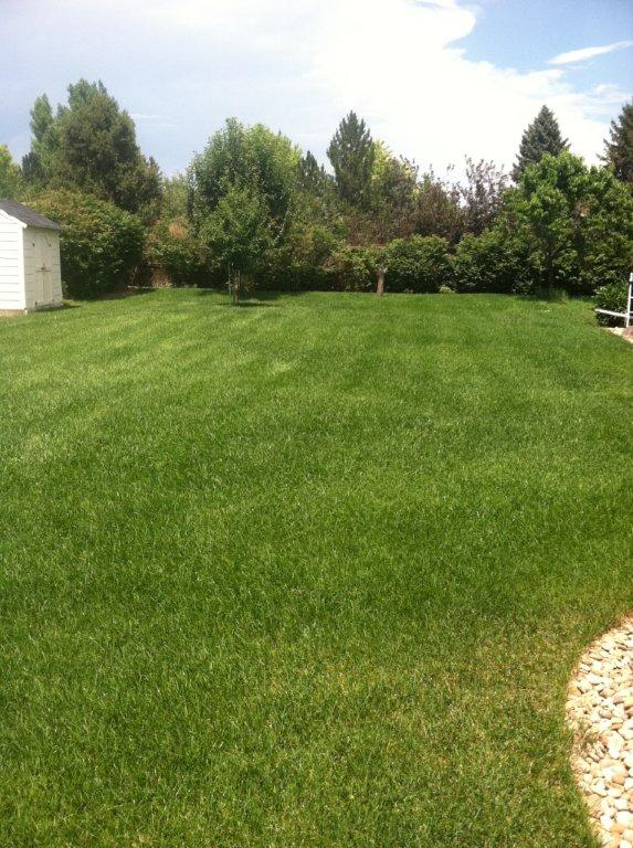After Overseeding 3